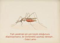sinek